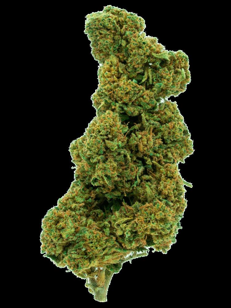Cima di marijuana de La Canapa Legale